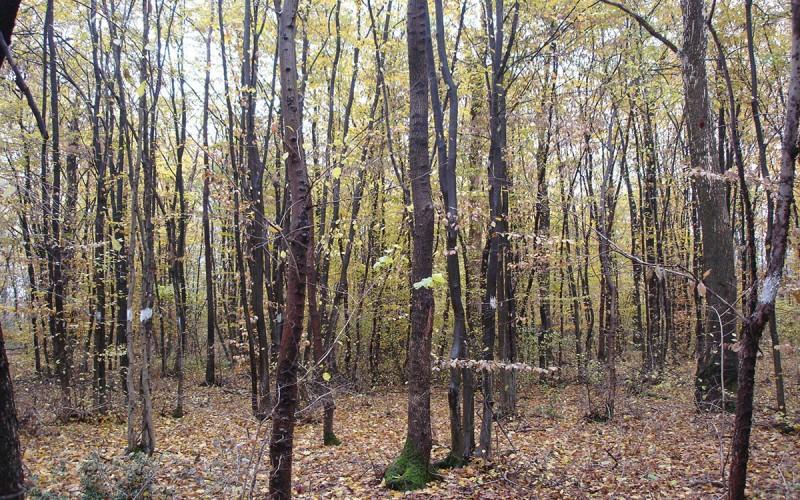 I nostri boschi